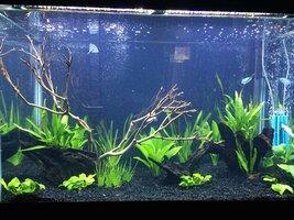 ImageUploadedByFish Lore Aquarium Fish Forum1453315222.379215.jpg