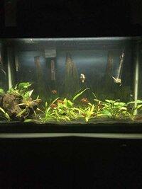 ImageUploadedByFish Lore Aquarium Fish Forum1453689486.005291.jpg