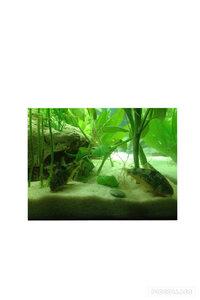 ImageUploadedByFish Lore Aquarium Fish Forum1453868935.580493.jpg