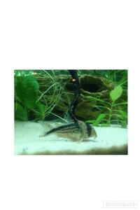 ImageUploadedByFish Lore Aquarium Fish Forum1453868946.713554.jpg