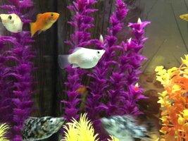 ImageUploadedByFish Lore Aquarium Fish Forum1454185827.518937.jpg