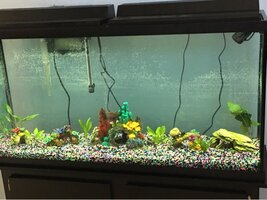 ImageUploadedByFish Lore Aquarium Fish Forum1454365366.732343.jpg