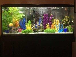 ImageUploadedByFish Lore Aquarium Fish Forum1454457356.781065.jpg
