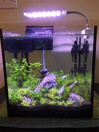 ImageUploadedByFish Lore Aquarium Fish Forum1454460026.269360.jpg