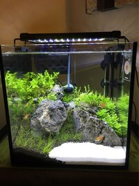 ImageUploadedByFish Lore Aquarium Fish Forum1454460059.504085.jpg