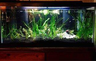 ImageUploadedByFish Lore Aquarium Fish Forum1455512451.909179.jpg