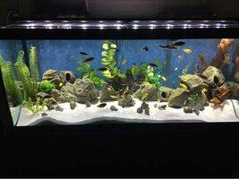 ImageUploadedByFish Lore Aquarium Fish Forum1455513539.380621.jpg