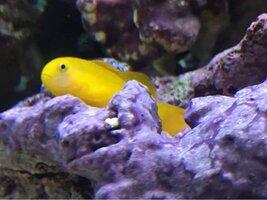 ImageUploadedByFish Lore Aquarium Fish Forum1455577375.693036.jpg