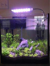 ImageUploadedByFish Lore Aquarium Fish Forum1455577756.385918.jpg