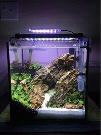 ImageUploadedByFish Lore Aquarium Fish Forum1455577806.805575.jpg