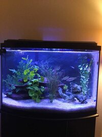 ImageUploadedByFish Lore Aquarium Fish Forum1455599114.135682.jpg