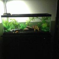 ImageUploadedByFish Lore Aquarium Fish Forum1455601691.650814.jpg