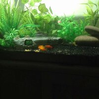 ImageUploadedByFish Lore Aquarium Fish Forum1455601738.151462.jpg