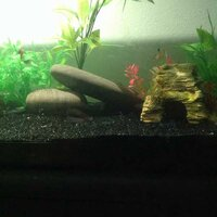 ImageUploadedByFish Lore Aquarium Fish Forum1455601769.192278.jpg