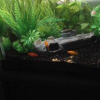 ImageUploadedByFish Lore Aquarium Fish Forum1455602136.250828.jpg