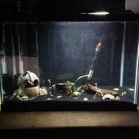 ImageUploadedByFish Lore Aquarium Fish Forum1455602163.246023.jpg