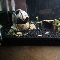 ImageUploadedByFish Lore Aquarium Fish Forum1455602181.804048.jpg
