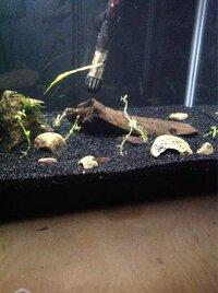 ImageUploadedByFish Lore Aquarium Fish Forum1455602198.085493.jpg