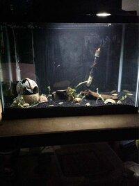 ImageUploadedByFish Lore Aquarium Fish Forum1455602221.256695.jpg