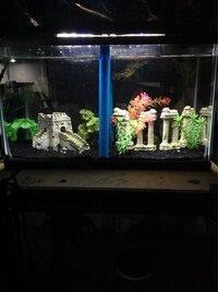 ImageUploadedByFish Lore Aquarium Fish Forum1455602264.431098.jpg