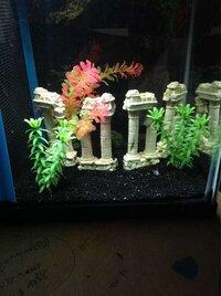 ImageUploadedByFish Lore Aquarium Fish Forum1455602315.308143.jpg