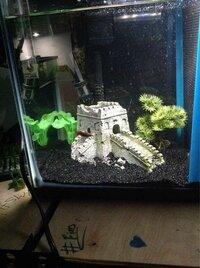 ImageUploadedByFish Lore Aquarium Fish Forum1455602350.390551.jpg