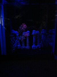 ImageUploadedByFish Lore Aquarium Fish Forum1455602367.649016.jpg
