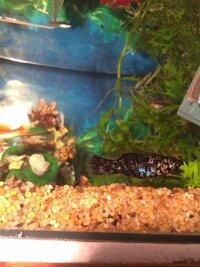 ImageUploadedByFish Lore Aquarium Fish Forum1455624020.481805.jpg