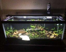 ImageUploadedByFish Lore Aquarium Fish Forum1455676744.072788.jpg
