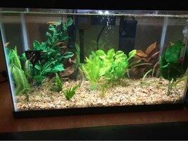 ImageUploadedByFish Lore Aquarium Fish Forum1455685833.366960.jpg