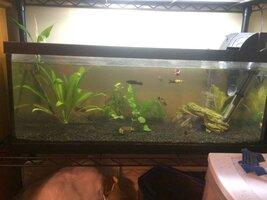 ImageUploadedByFish Lore Aquarium Fish Forum1455982561.929321.jpg