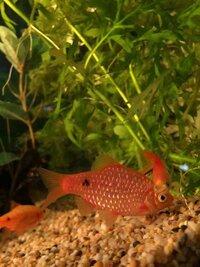 ImageUploadedByFish Lore Aquarium Fish Forum1456079884.706322.jpg