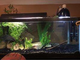ImageUploadedByFish Lore Aquarium Fish Forum1456101983.558188.jpg