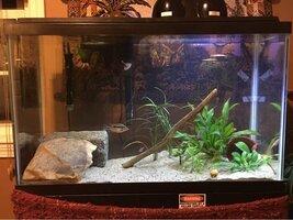ImageUploadedByFish Lore Aquarium Fish Forum1456102086.338858.jpg