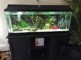 ImageUploadedByFish Lore Aquarium Fish Forum1456435221.774092.jpg