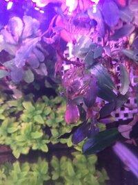 ImageUploadedByFish Lore Aquarium Fish Forum1459569303.070770.jpg