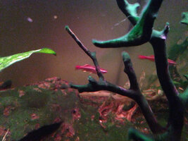 ImageUploadedByFish Lore Aquarium Fish Forum1465332480.061050.jpg