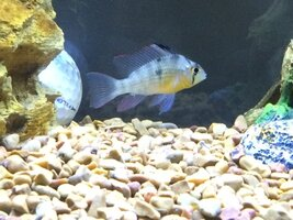 ImageUploadedByFish Lore Aquarium Fish Forum1468776640.953885.jpg