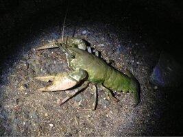 ImageUploadedByFish Lore Aquarium Fish Forum1471663410.530882.jpg