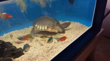 Ra with his Rainbowfish.jpg
