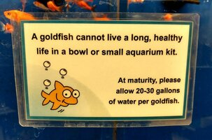 Goldfish sign].jpg