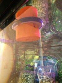 frozen fish feeder.JPG