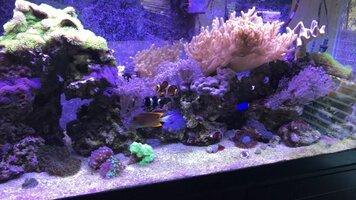 i miss my reeftank.jpg