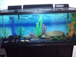 fishtankmay202012.jpg