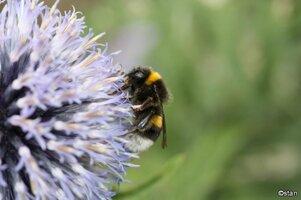 Bees 015.jpg