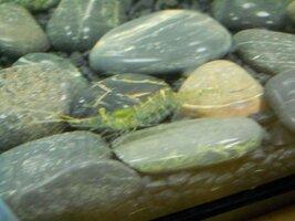 fish pics 014.jpg