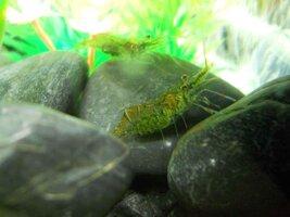 fish pics 021.jpg