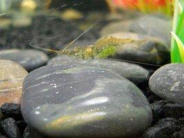 fish pics 027.jpg