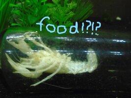 Funny_Crayfish_LI.jpg