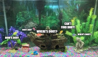 WHERES DORYY.jpg